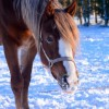 2015-02-08_dille (1)